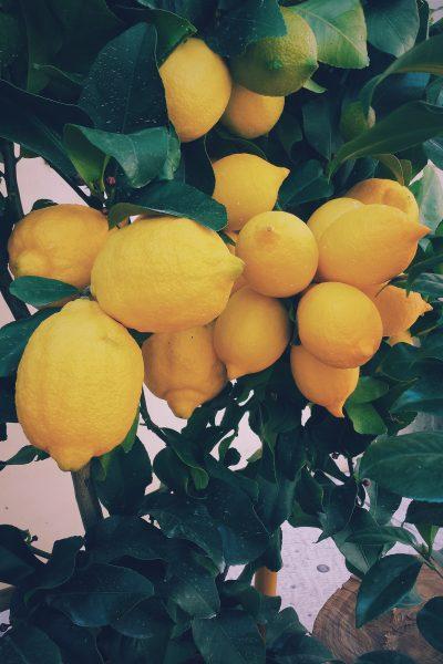 unsplash ernest porzi lemon peel candy