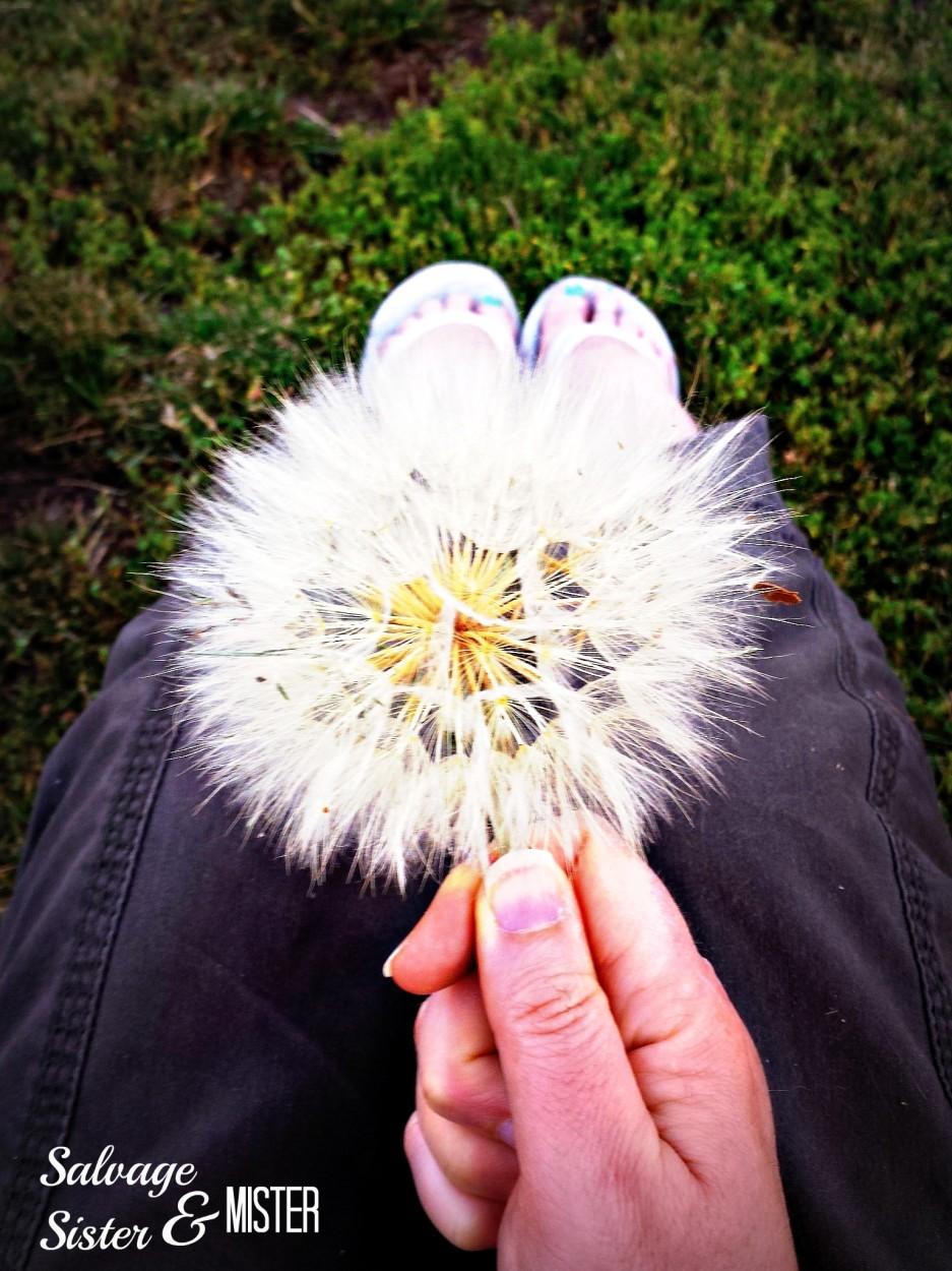 weeds dandelion 1