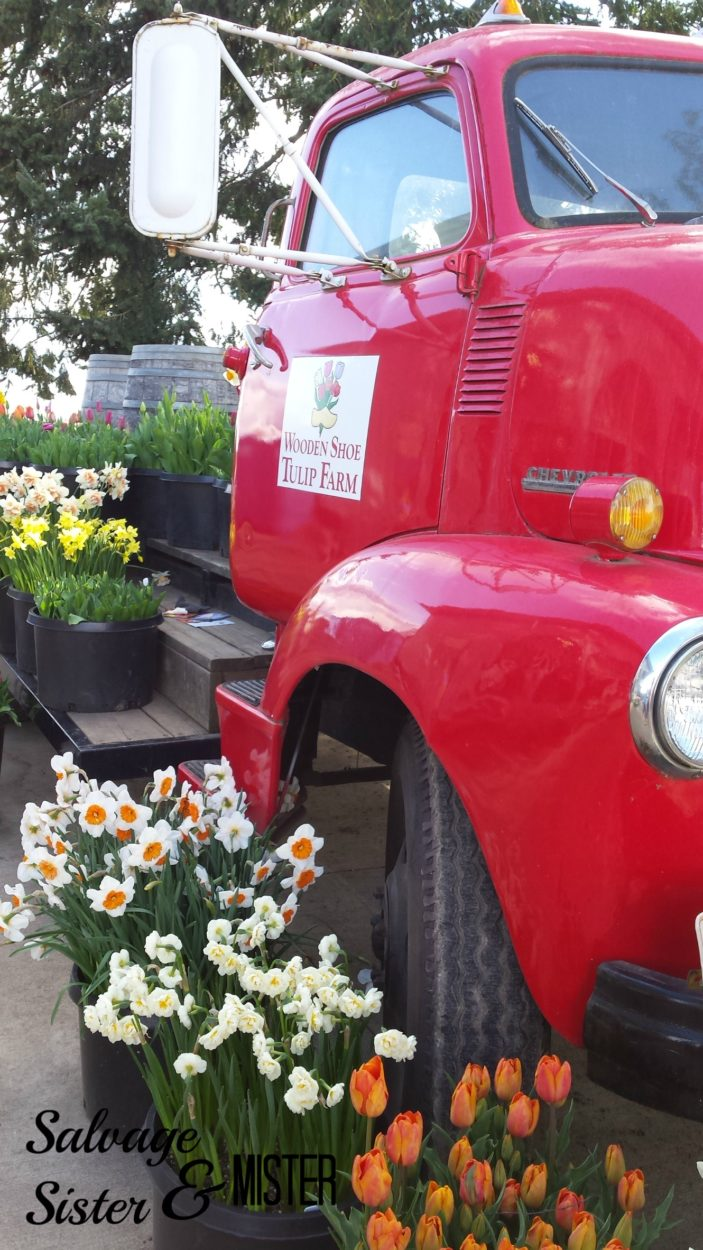 Farm truck at wooden shoe tulip festival. Spring flowers in the Pacific Northwest.