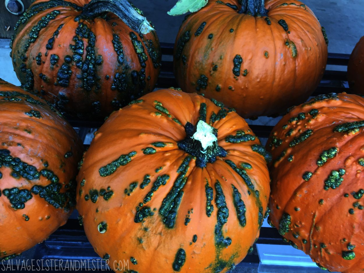 Pumpkins are as diverse as people. And wouldn't it be boring if they (we) were all the same? Lessons from the pumpkin patch