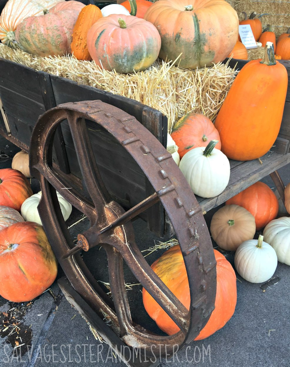 lessons from the pumpkin patch. diversity