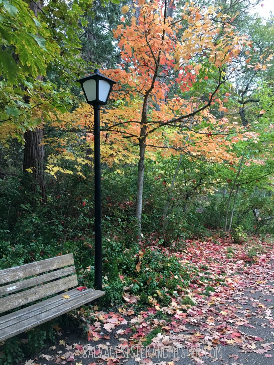 Lithia Park in Ashland Oregon during the Fall. Come see all the Oregon has to offer in this What to do in Oregon bloggers tour shows you where to do