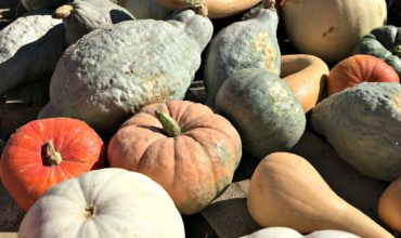 Reduce Waste – Choosing Edible Pumpkins and Squashes for Your Decor