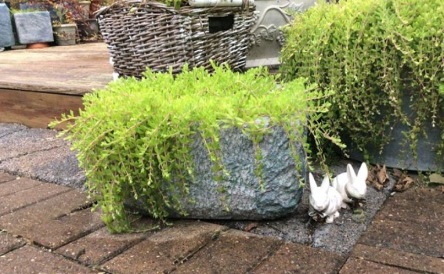 Turning a styrofoam cooler into a planter. Great for the patio. It's great ourtoodr decor and a great way to repurpose a cooler that sometimes gets wasted or thrown out. Upcycle to prevent it from being tossed.
