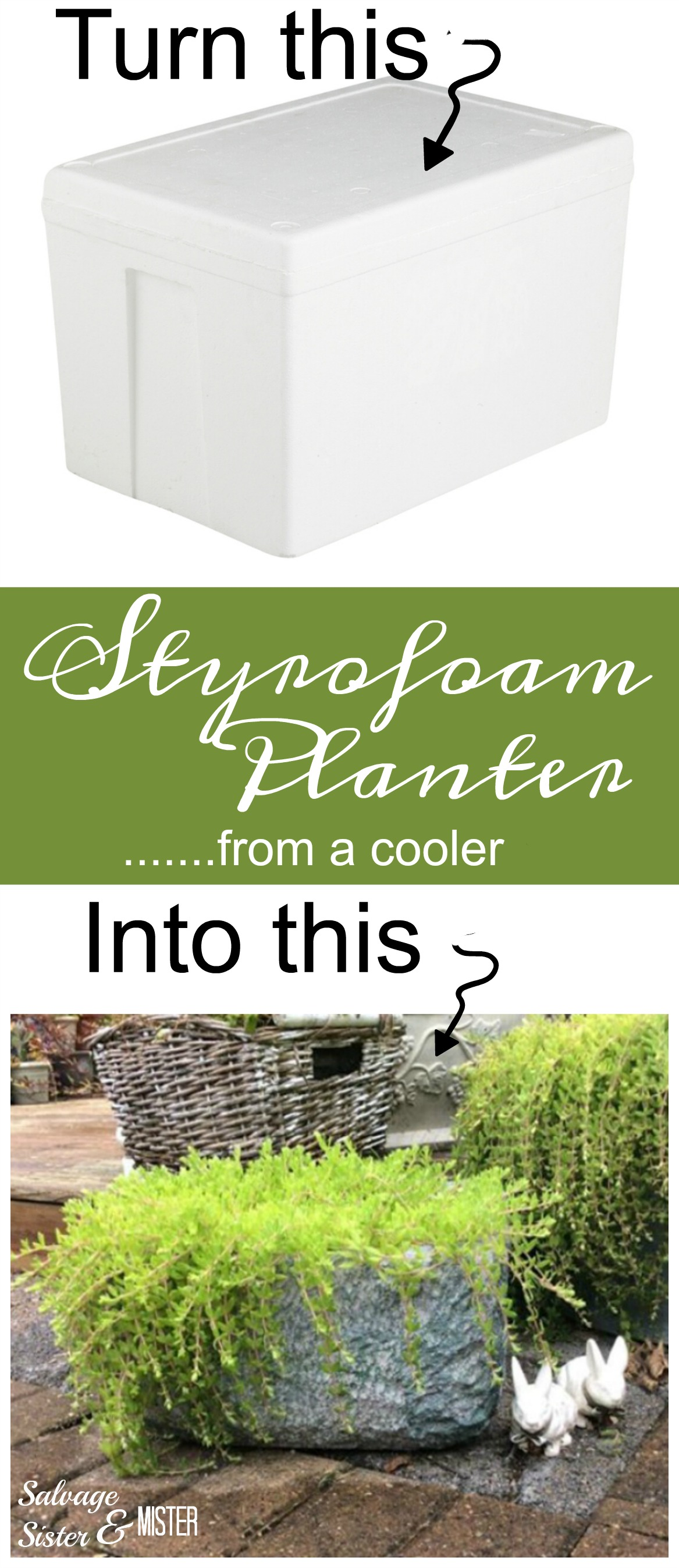 A food cooler turned into a styrofoam planter. Perfect for the backyard and a great reuse (waste not/want not). An easy diy project to repurpose or upcycle those inexpensive coolers so they don't get thrown away.