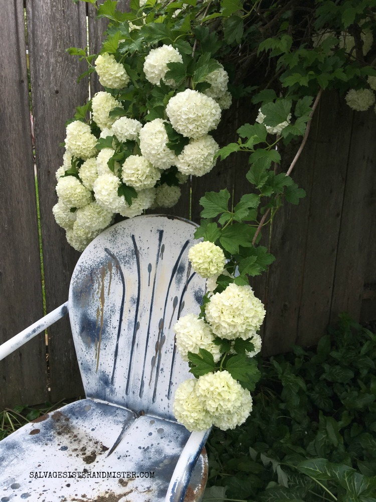 Vintage chair and Snowball flowers / tree found on salvagesisterandmister.com